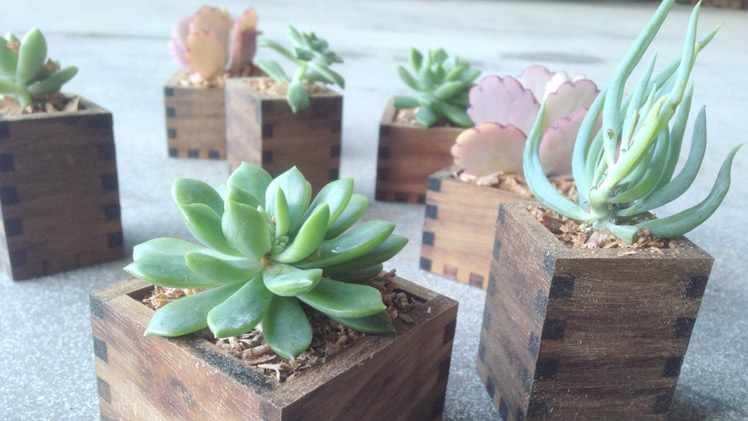 Huddle and Co wooden planters