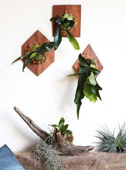 Gift Guide: Homewares and Plants with Staghorn