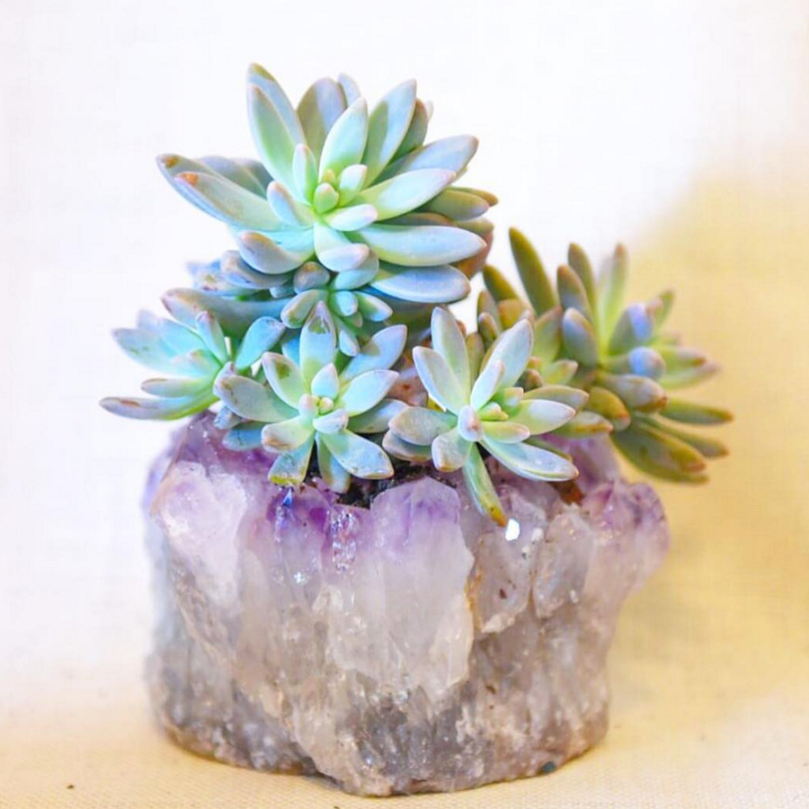 Finders-Keepers-Featured-Product-Terrariums-by-Bella-9