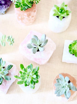 Featured Product: Crystal Planters by Terrariums By Bella