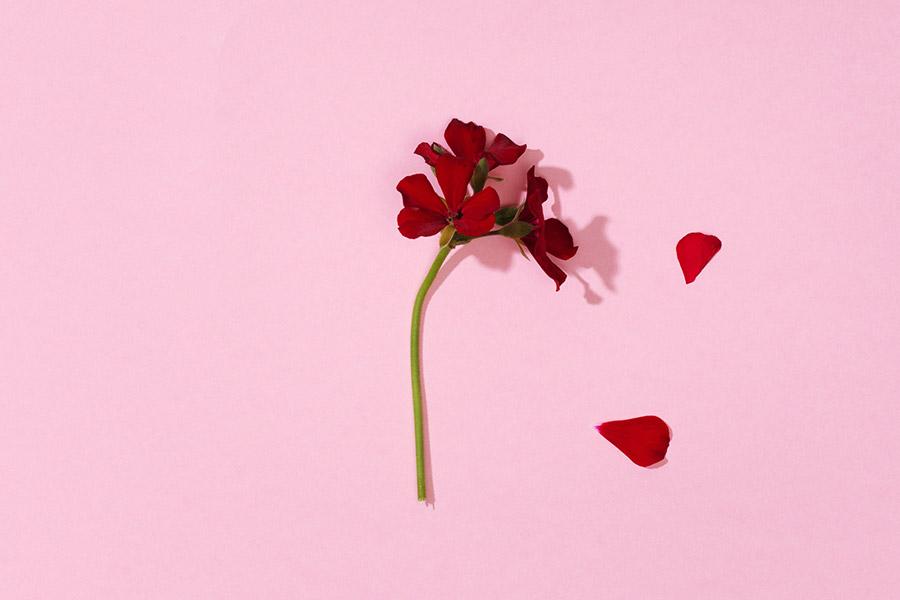 Finders-Keepers-5-questions-ALŌ-Botanics-9